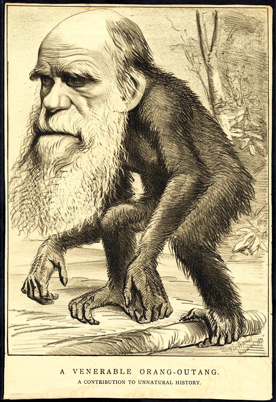 """Darwin-Karikatur aus """" The Hornet"""" vom 22. März 1871"""