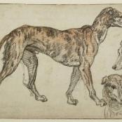 Federico Zuccari: Studienblatt mit spanischen Windspiel (1594 - 1595)
