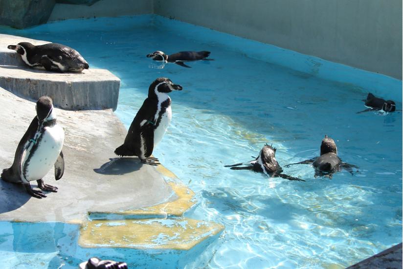 """""""Warum haben Pinguine einen Frack an?"""" (Zoo Köln)"""