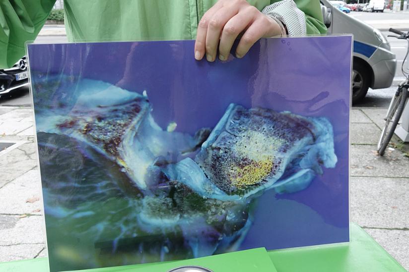 Antibiotika-Ablagerung werden unter einer Schwarzlichtlampe sichtbar.