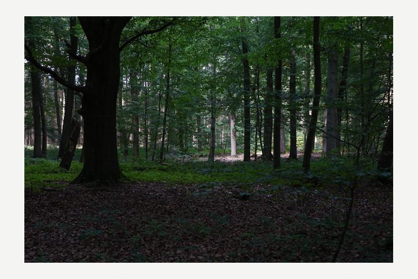 Der Boberower Wald