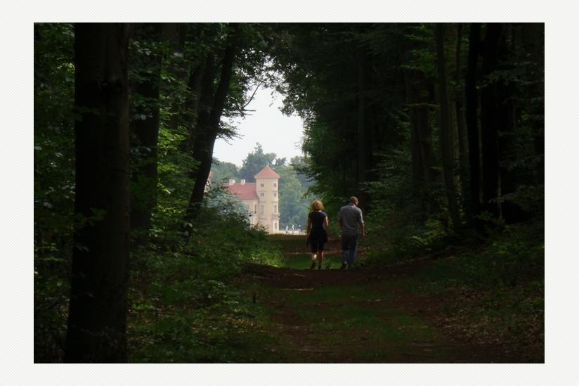 Waldweg zum See