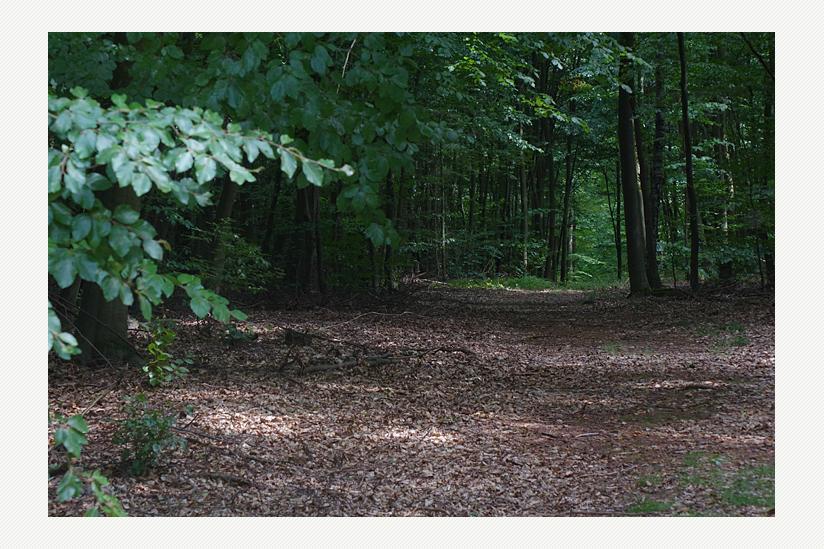 Der Forst von Boberow - ein tiefer Wald