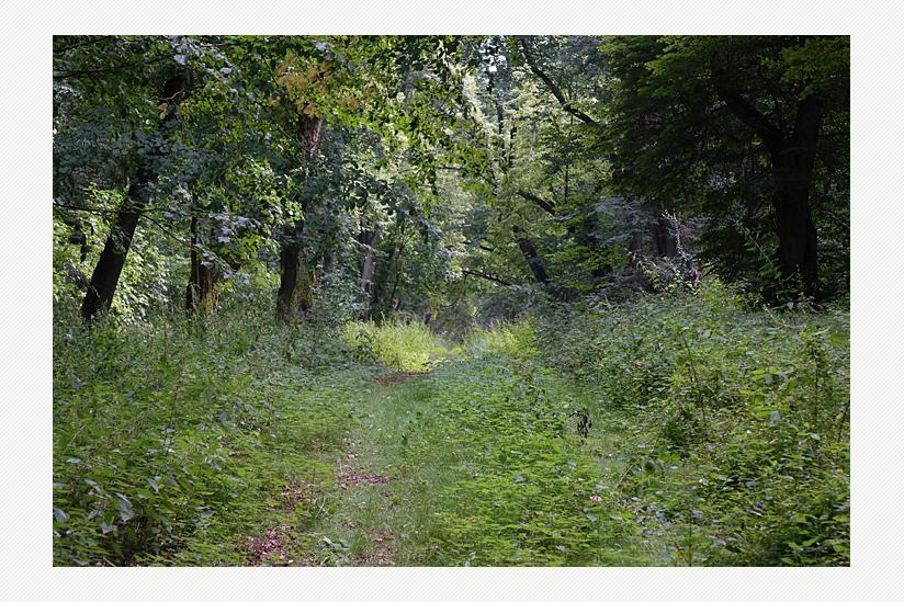 Der Wald von Boberow - wo auch heute noch die Kutschen fahren