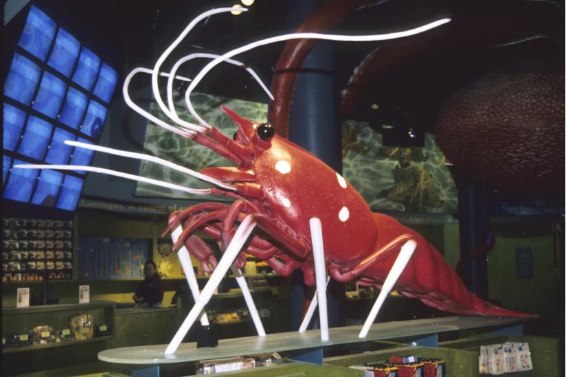 "Debelius-""Tochter"" Lysmata als Replik am Eingang des Shed-Aquariums Chicago-USA"