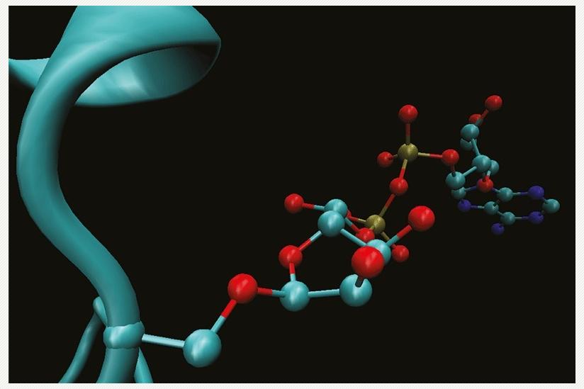 Komplexe Markierung für die DNA-Reparatur