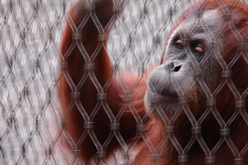 Ist hohe Lebenserwartung hinter Gittern überhaupt erstrebenswert?