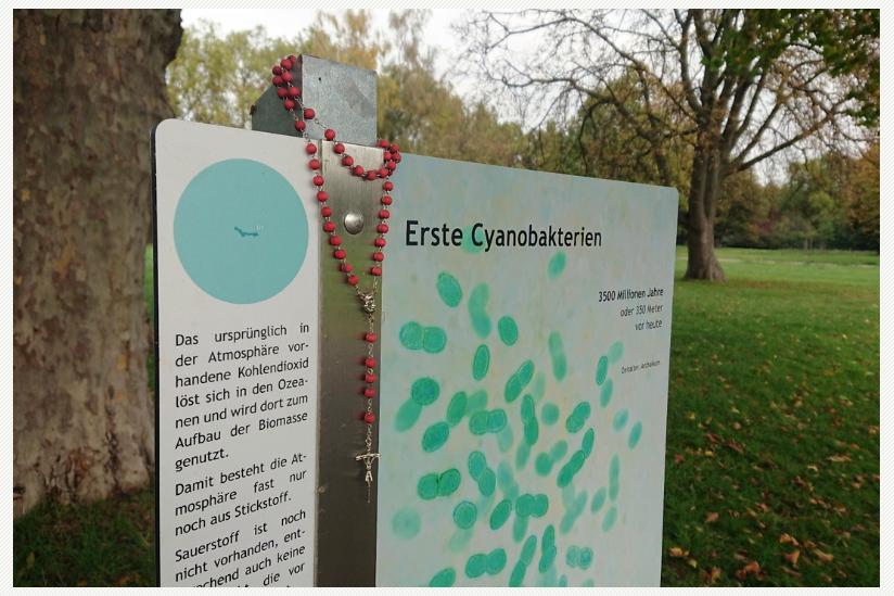 Der Evolutionsweg in Düsseldorf wurde von Unbekannten gesegnet.