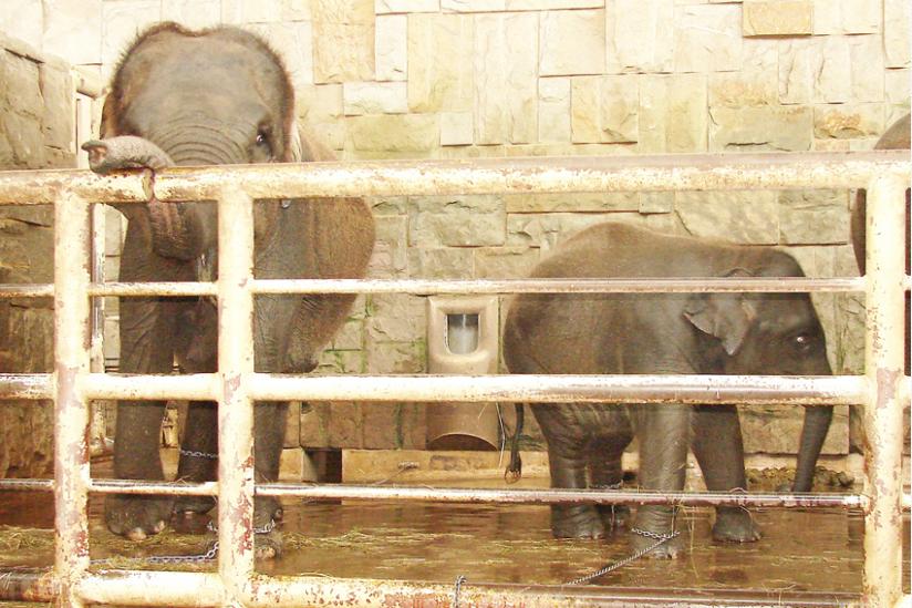 """Elefanten im vorsintflutlichen """"Dickhäuterhaus"""""""