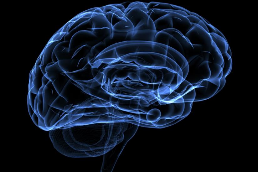 Stabile Wahrnehmung im erwachsenen Gehirn | hpd