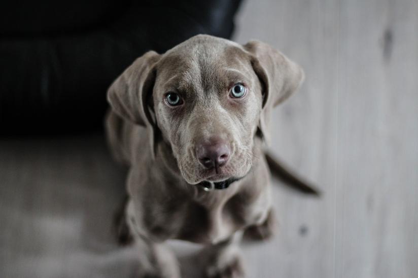 Brauchen ein Hund mit solchen Augen göttlichen Segen?