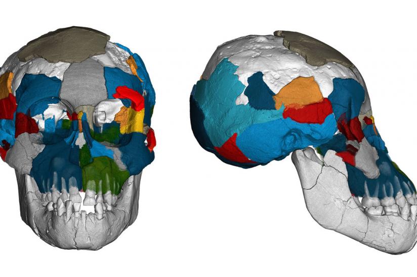 """Drei Millionen Jahre alte Gehirnabdrücke in fossilen Schädeln der Art Australopithecus afarensis (bekannt durch """"Lucy"""" und das hier abgebildete """"Dikika-Kind"""" aus Äthiopien) werfen ein neues Licht auf die Evolution des Gehirns."""