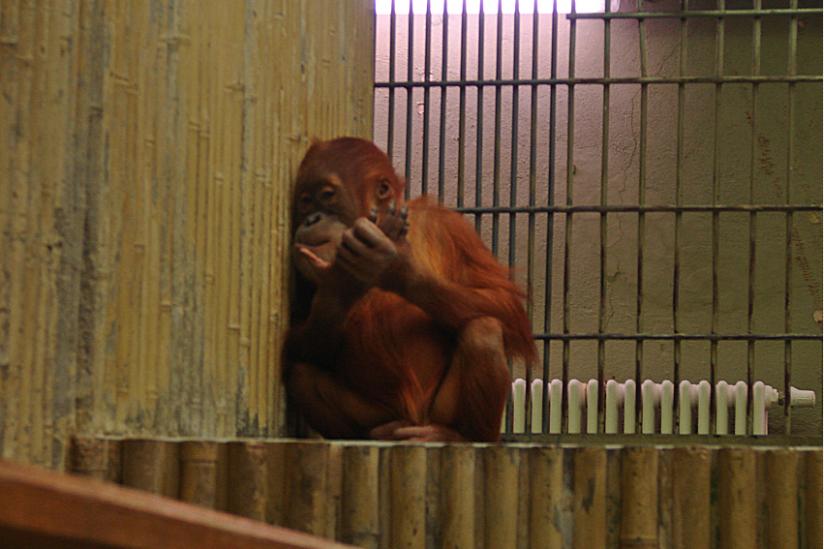 Tödliche Langeweile im Dresdener Zoo