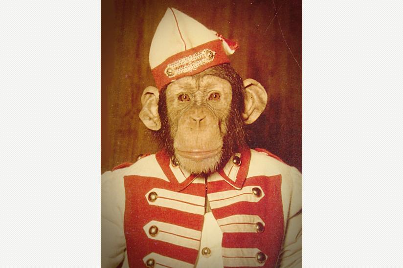 Schimpanse PETERMANN in karnevalistischer Gardeuniform, Mitte der 1950er