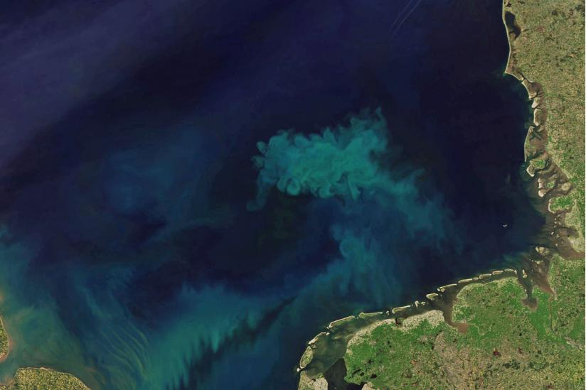 Auf Satellitenbildern wirken die Algenteppiche mit ihren hellen Schlieren wie Kunstwerke.
