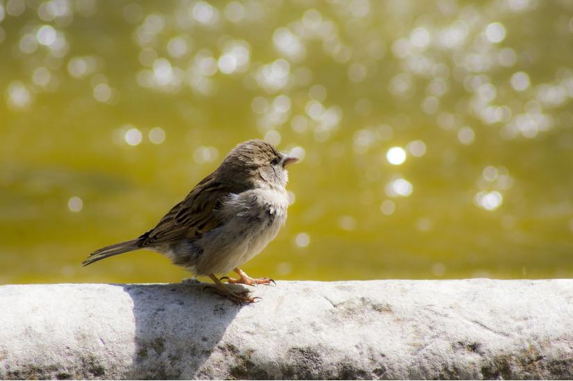 Vogelsterben