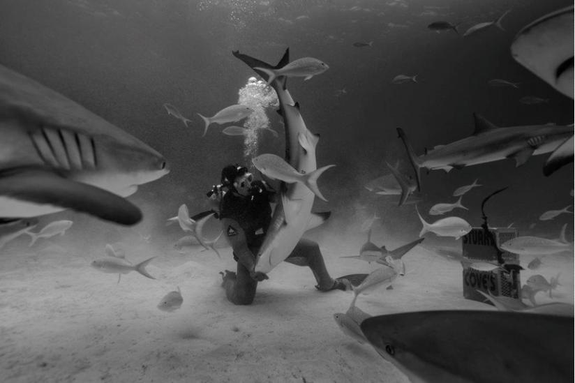 Taucher füttern Hai an
