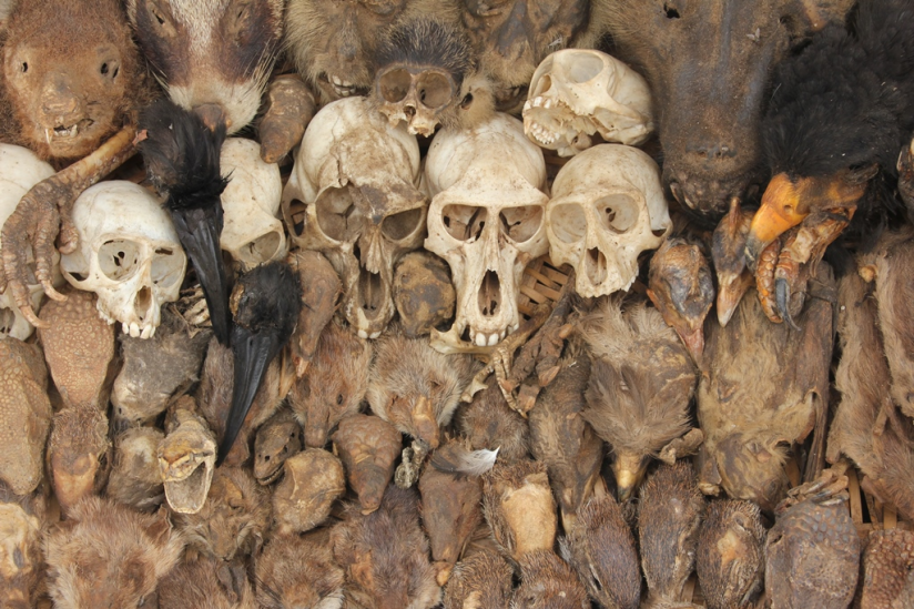 Auf dem größten Voodoo-Markt in Westafrika