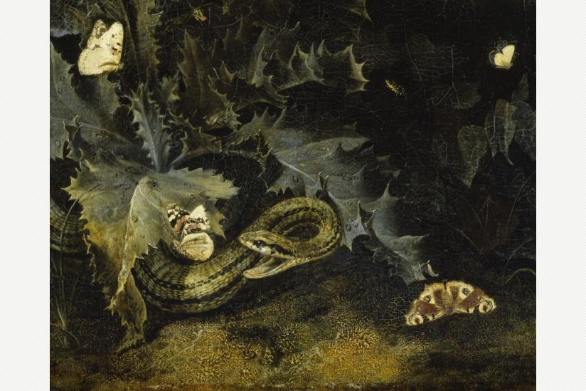 Otto Marseus van Schrieck - Waldboden mit Distel und Schlange