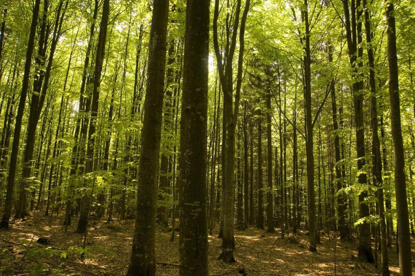 Irgendwo in diesem Wald verläuft die grüne Grenze zwischen Bayern (Deutschland) und Österreich