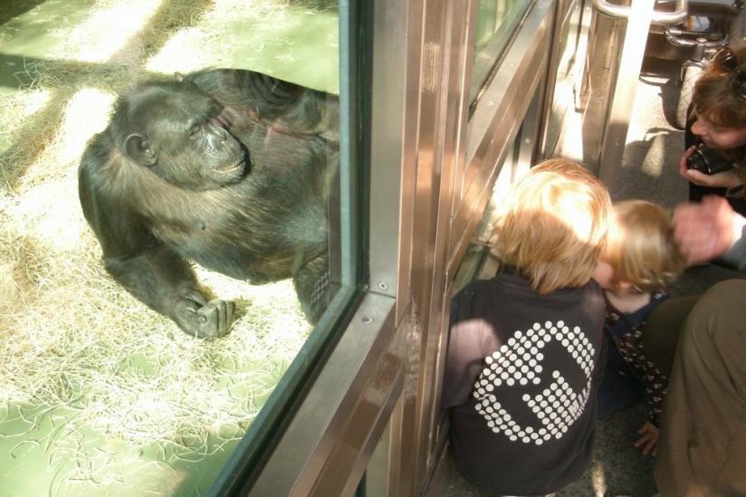 Was Schimpanse und Mensch trennt...
