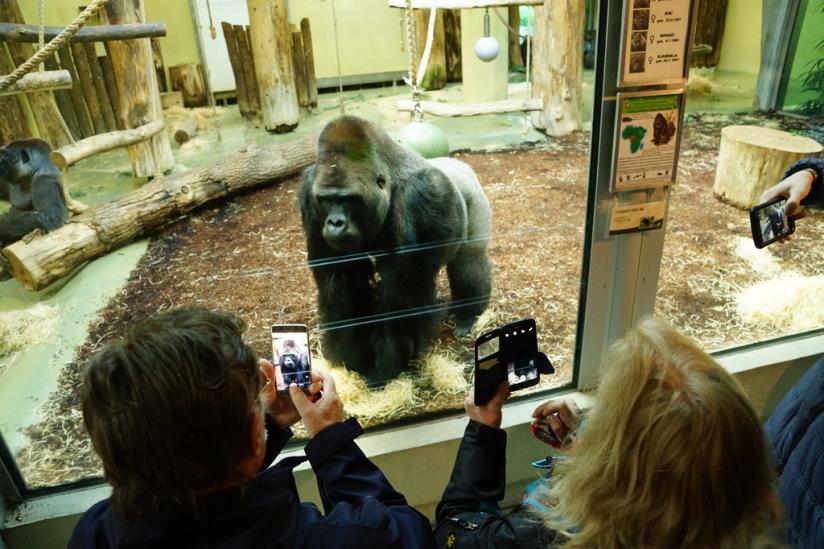Im Zoo Berlin