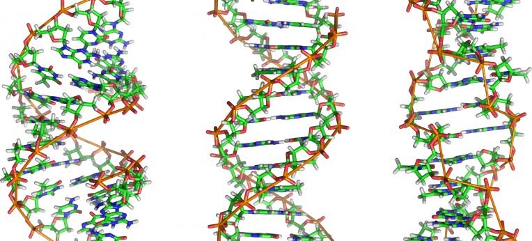 Von links nach rechts: Strukturmodelle der A-, B- und Z-DNA mit jeweils 12 Basenpaaren