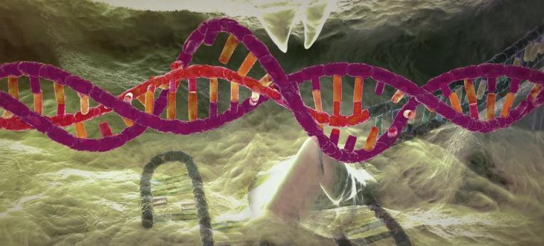 CRISPR-Cas9 hat die Genom-Editierung revolutioniert.