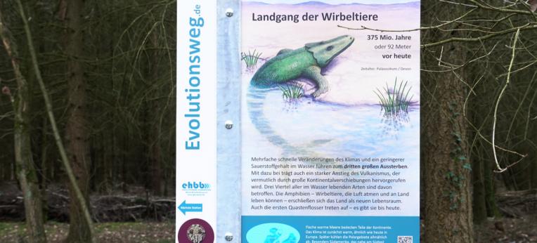 Evolutionsweg-Schild zu Wirbeltieren
