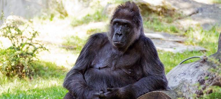 """""""Auserwählte können nun mal nicht von profanen Primaten abstammen."""""""