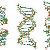 Strukturmodelle der A-, B- und Z-DNA