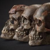 Drei ca. 31.000 Jahre alte Schädel aus Dolni Věstonice im heutigen Tschechien.