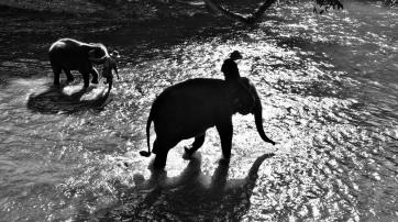 Diese Romantik hat ihren Preis: Die Elefanten werden gequält.
