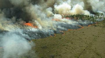 Der Regenwald wird durch Feuerrodung großflächig zerstört.
