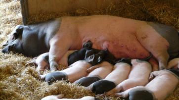 So romantisch stellen sich (zu) viele einen Bauernhof vor.
