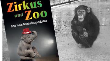 """Schimpansenkind auf nacktem Beton im """"Leintalzoo"""" bei Heilbronn"""