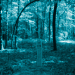 Die hölzerne Matzewa im Wald von Karmanowice.