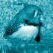 Männlicher naturfarbener Zebrafink (Taeniopygia guttata)