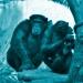 Schimpansengruppe im Wolfgang-Köhler-Primatenforschungszentrum im Zoo Leipzig.